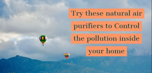 Control the pollution inside your home. Try these natural air purifiers.